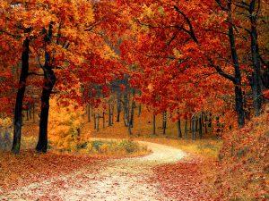 Un autunno d'arte. Venti appuntamenti che valgono un week end